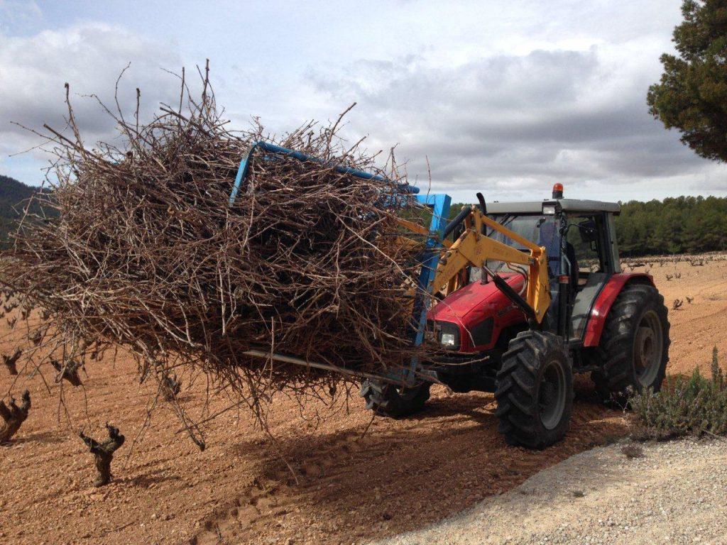 Pruning management 2018