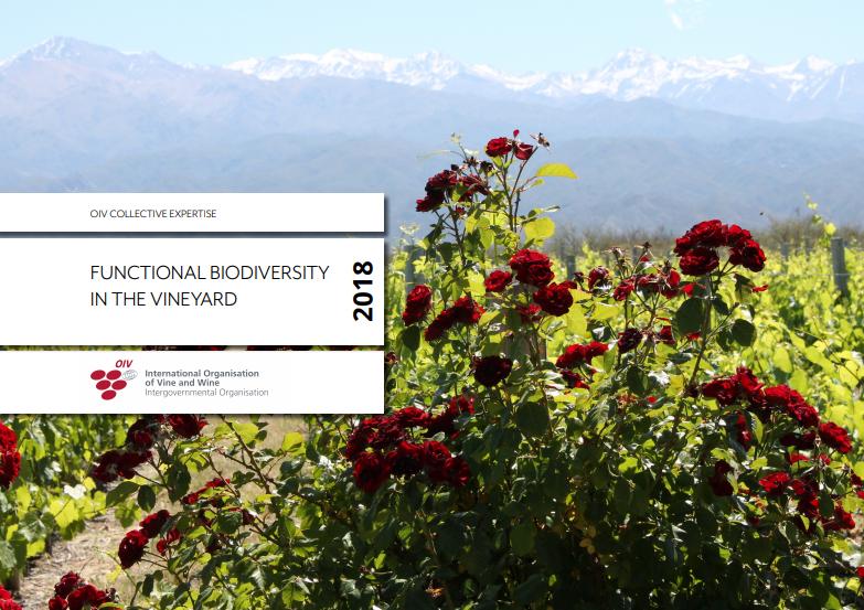 La biodiversidad funcional en el viñedo