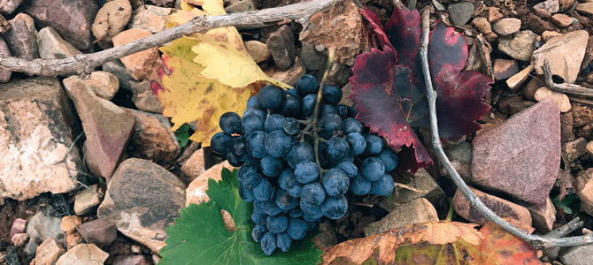 The wine sector confronts the challenge of climate change
