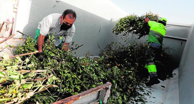 Iniciativa municipal para recogida de restos de poda y evitar la emisión de GEI a la atmósfera